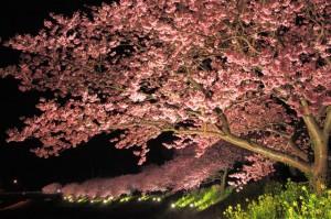 みなみ夜桜